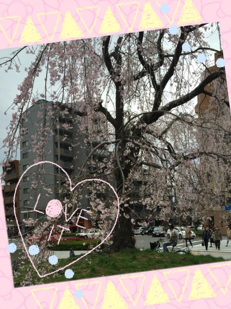 あきこ  春