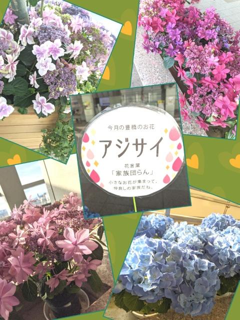 鈴木 あんな 05/26 11:32 紫陽花